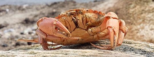 Unngå fisk og skalldyr fra forurensede havner, fjorder og innsjøer