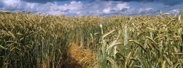 Plantevernmidler – Hvor farlige er de egentlig og utgjør de en helserisiko?